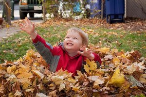 jump in pile of leaves